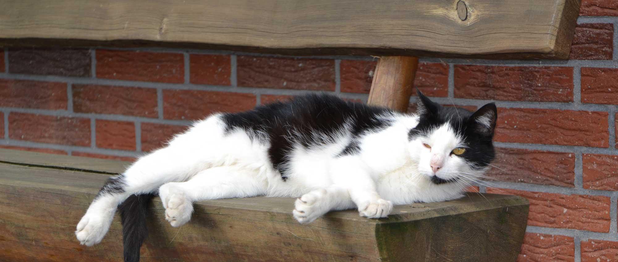 Am Wiesenhof Katze